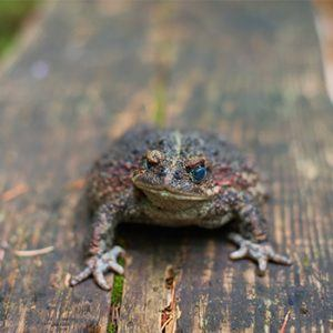 Toad on board